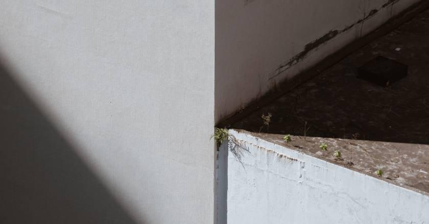 Skimmelsvamp på bordplade